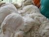 top shearing blanket