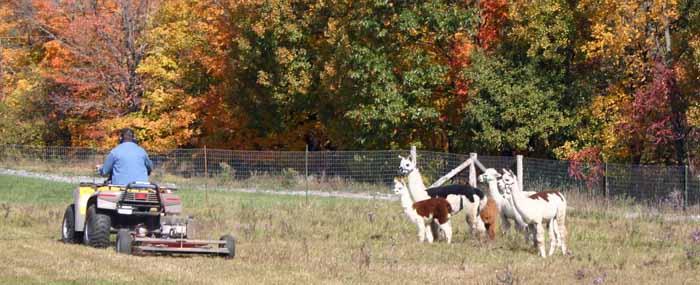 Farmer moving pasture