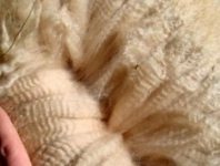 Cartwright's 2009 Fleece