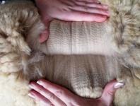 Cartwright's 2014 Fleece