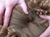 first-place-fleece