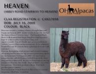 HEAVEN Stud Profile Pg 1