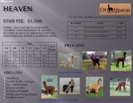 HEAVEN Stud Profile Pg 2