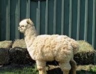 First Fleece