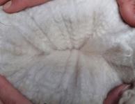 Lilly's Fleece