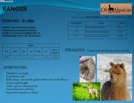RANGER Stud Profile Pg 2