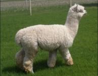 Zac in Full Fleece
