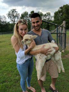 alpaca cria baby