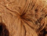 Bino's Cria Fleece
