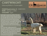CARTWRIGHT Stud Profile Pg 1