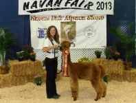 navan-2013-best-in-show-low-res