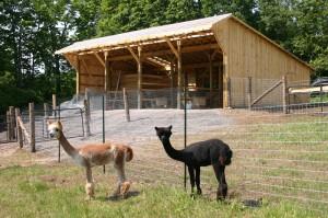 Oak HIlls Alpacas' Barn