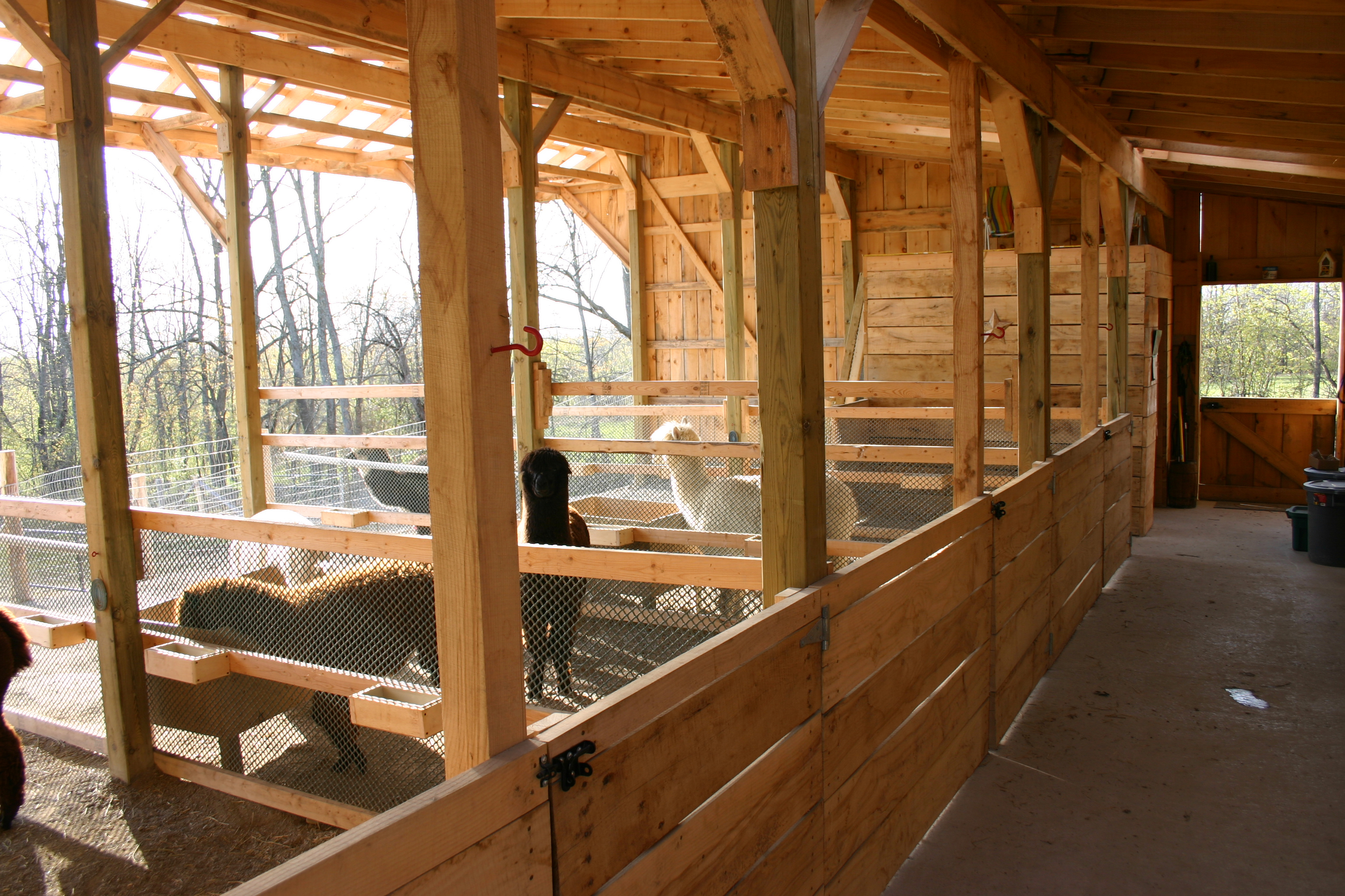 Barn Raising Oak Hills Alpacas