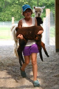 Kids are always eager to bring the cria in for daily weighing.