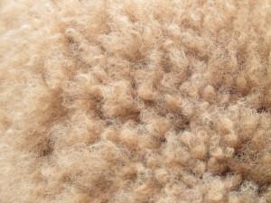 Fleece low res
