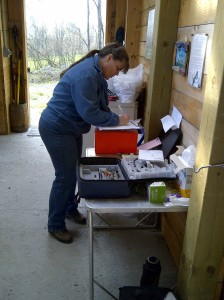 My sister, a bookkeeper, lends a hand on shearing day as our trusted record keeper.