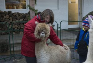 WELLINGTON, Ont. (05/11/2015) - Heather holds Bow the alpaca so a child could pet him. Photo by Callum Rutherford