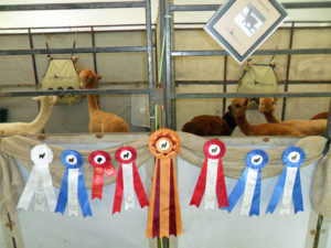 Heather Candler - Breeding farms will show their animals for feedback and exposure.