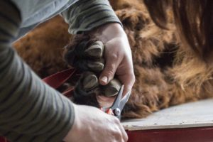 low-res-simple-pruners-are-used-to-trim-toes-when-needed