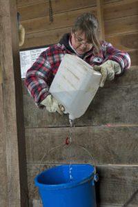 heated pails watering alpacas