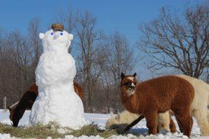 alpacas, snowman