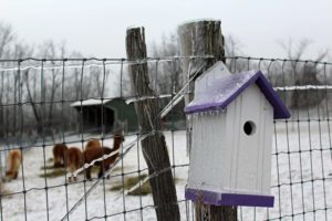 ice storm alpacas birdhouse fence winter canada