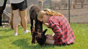 girl alpaca