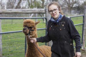 alpaca girl