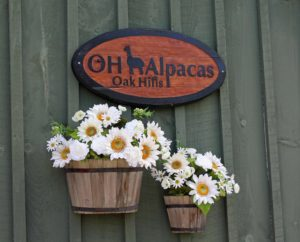 barn sign alpacas fowers daisies