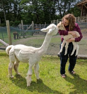 alpaca mother baby girl farm