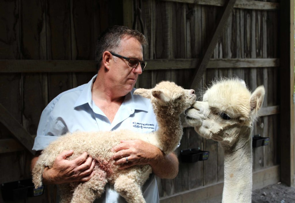 Oak Hills Alpaca owner Mike holds an alpaca cria while its dam looks on attentively.