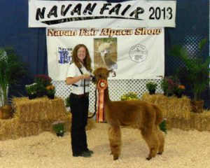 Alpaca takes Best in Show at Navan Fair in 2013!